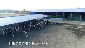 包联驻村精准脱贫系列公益宣传片之五(昂素篇)